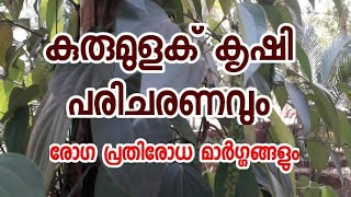 Download #kurumulaku krishi paricharanam/#how to grow black pepper at home Video