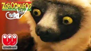 Zoboomafoo | Full Episode: Wild Lemurs | Animals For Kids