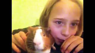 This is my guinea pig named Butter