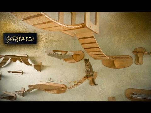 🙀 Goldtatze © Katzenzimmer   Katzen Möbel aus Holz   Cat Tree Room