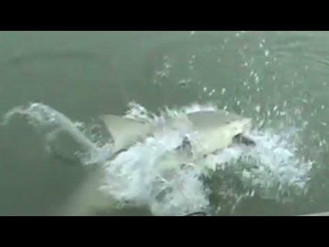 Shark surprises fisher at Myrtle Beach