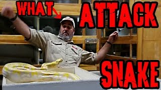 When Snakes Attack - Jay
