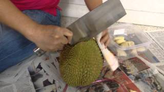 How to cut open a durian easy correct quick fast best simple