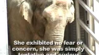 The Elephant Sanctuary | Dulary's Arrival
