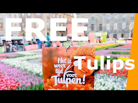 Amsterdam Tulips - Free Tulips in Amsterdam