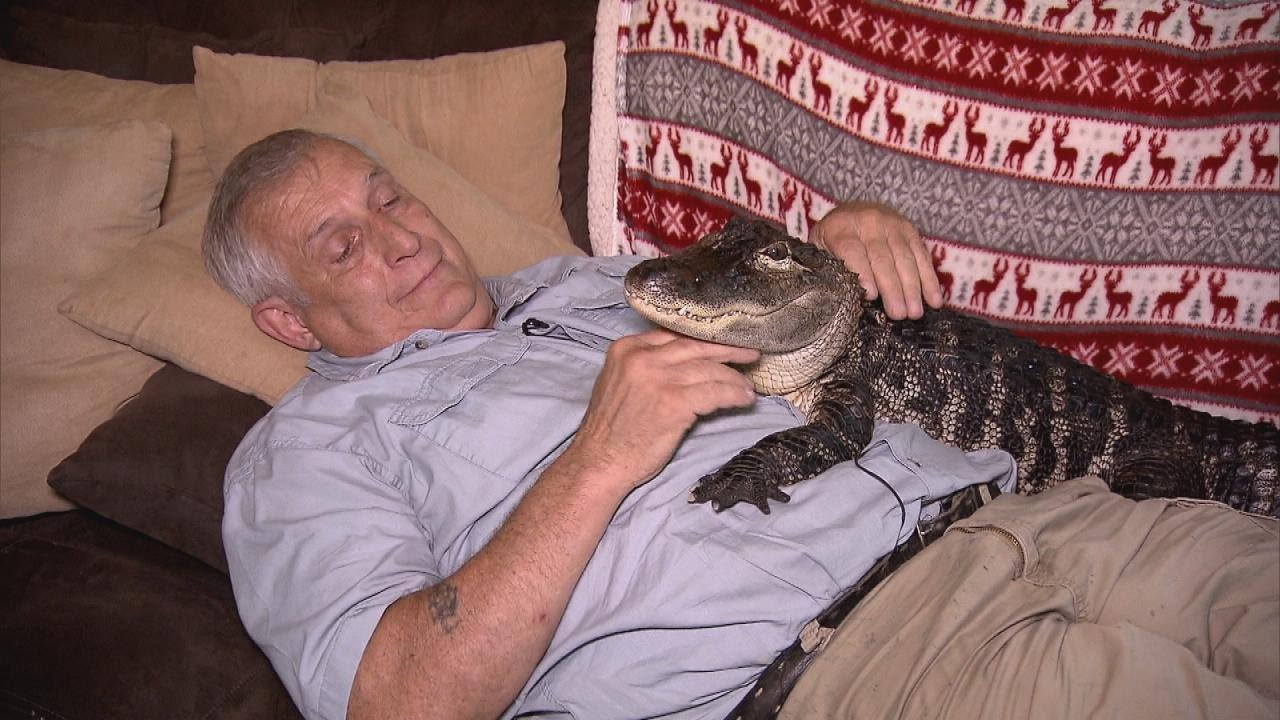 This Alligator Just Wants to Cuddle You