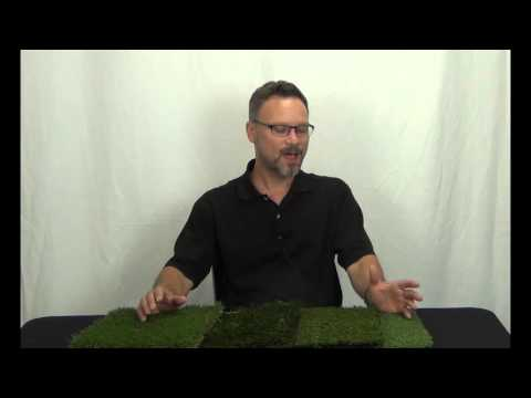 ATE Searches – How Much Does Artificial Turf Cost?