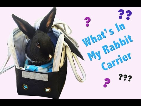 What's in My Rabbit Carrier