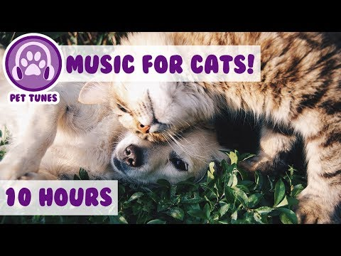 Relaxing Music for Pets to Help with Fireworks, Loud Noises and Parties