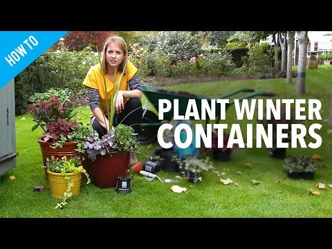 How to plant winter container gardens