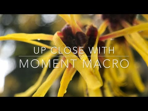 Is it Worth it to Buy the Moment Macro Lens?