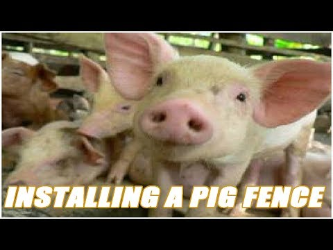 Installing An Electric Fence For Pastured Pigs