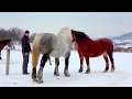 Download  Beautiful Horse Mating Ever - Finally Female Receives the Male MP3,3GP,MP4