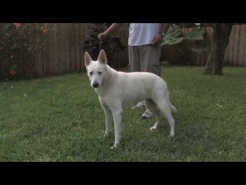 Dog Training & Care : Older Dog Potty Training