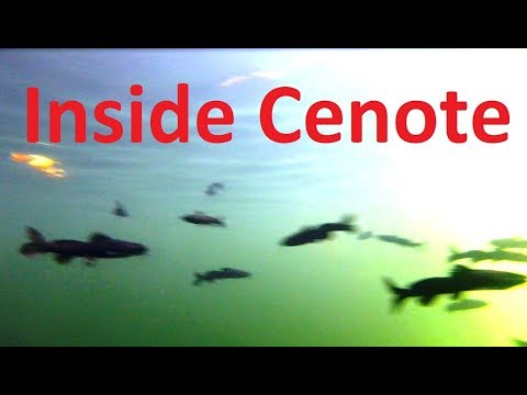 Swimming With FISH in CENOTE SINKHOLE, Ik Kil Yucatan, Mexico