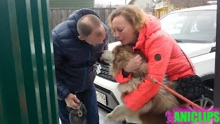 Dogs That RETURNED Home After Being LOST! After 1 year, 3 year,7 year