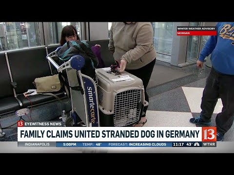 Family claims airline stranded their dog in Germany