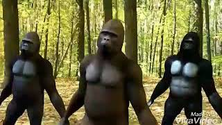 Char botol vodka monkey dance