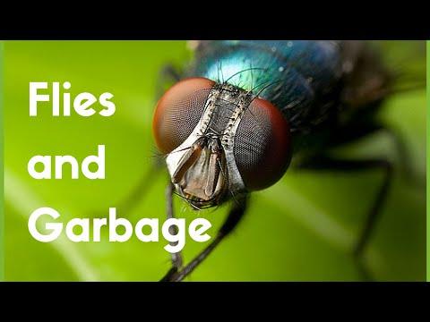 Flies Around Your Garbage