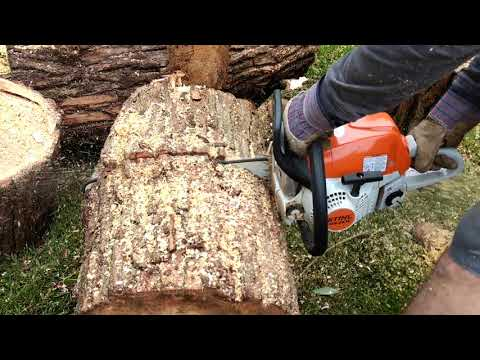 Stihl chain saw cuts through willow very easily