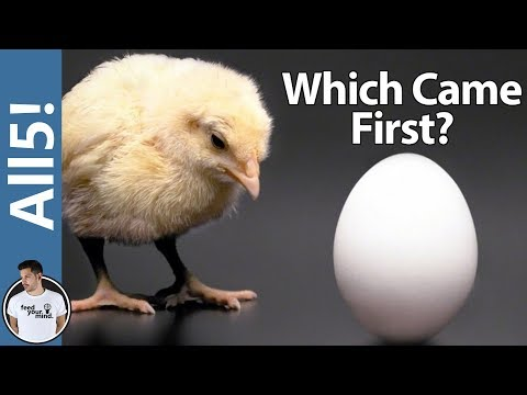 Which Came First, The Chicken Or The Egg? ANSWERED