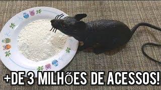 Como Acabar Com Ratos RÁpido