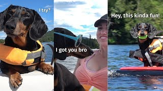 Oakley the Surfing Dachshund! (New 2019 Edit)