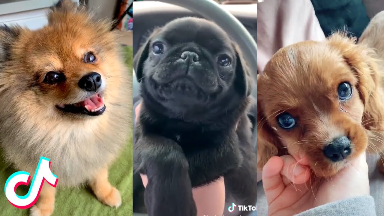 Cute Pets that Will Brighten Up Your Day 100% ❤️️🥰