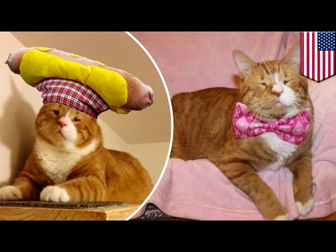Mr. Magoo the blind stray cat becoming star rocking hats and bow ties following book tour - TomoNews
