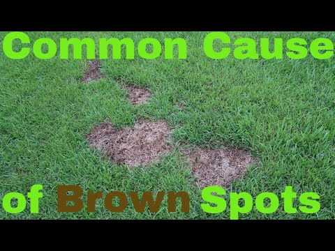 Brown Spots in the Lawn from Dog Urine, Fungus, Mowing