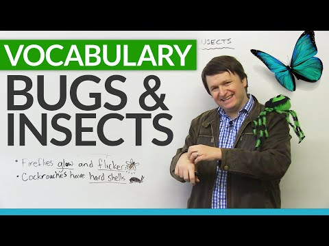 English Vocabulary: Talking about BUGS and INSECTS