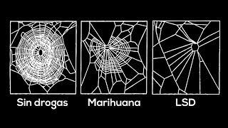 Hoy aprendí que las arañas...
