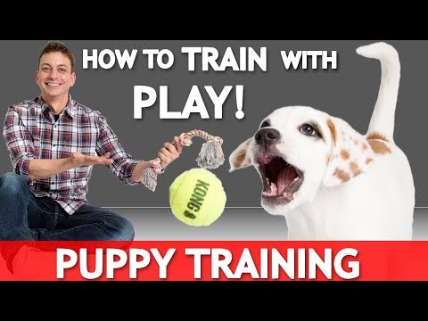 How to Train WITH Play with Your NEW PUPPY! How to Train Without Treats!
