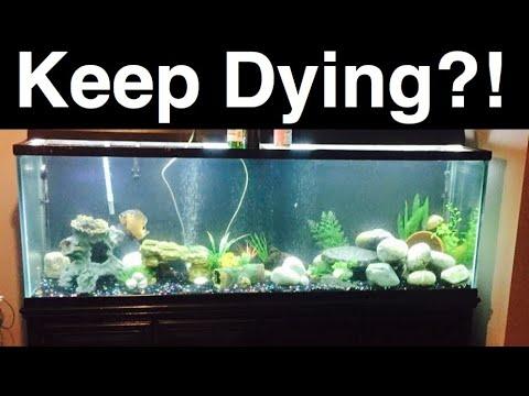 Aquarium Fish Keep Dying? #1 Reason Fish Die