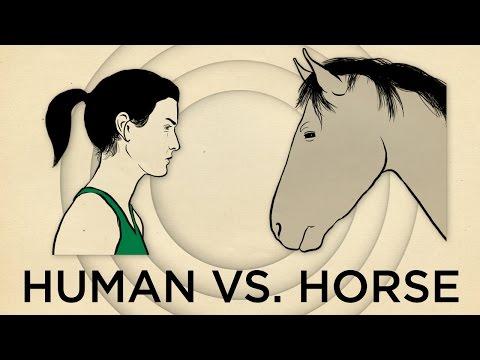 Human Vs. Horse Marathon    NPR's SKUNK BEAR