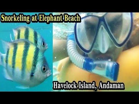 Snorkeling at Elephant Beach Andaman | Snorkeling in Havelock Island Andaman