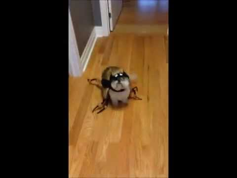 Oscar The Dog Spider