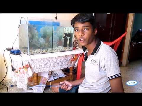 How To Clean A Fish Tank  Aquarium in Tamil(தமிழ்)