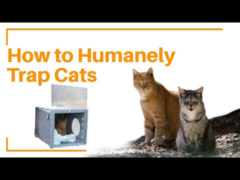 How to set a humane trap