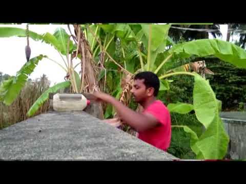 A Thirsty bird, keep water for birds in summer