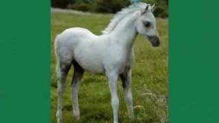 Carrwood Welsh Ponies - Enjoying Life.wmv
