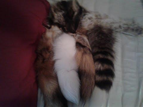 FURTAIL Fur Unboxing!