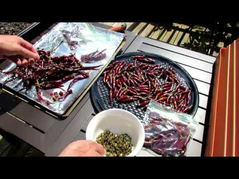 A Complete Guide on How to Oven Dry & Store Hot Peppers: Cayenne, Facing Heaven and Jalapenos