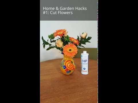Make Flowers Last Longer + Smell Better