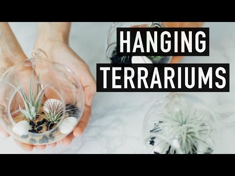How To-DIY Hanging Terrariums