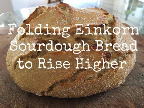 Folding Einkorn Sourdough Bread to Rise Higher