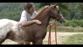 Half Arabian/Appaloosa Colt--Thee Indian Outlaw ABC