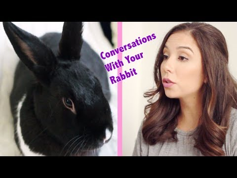 Conversations You Have With Your Rabbit