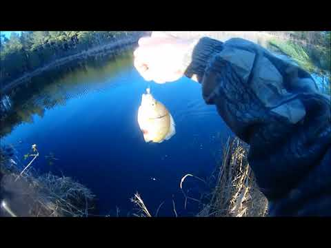 Fishing An Old Farm Pond, Bass And Fat Bluegill