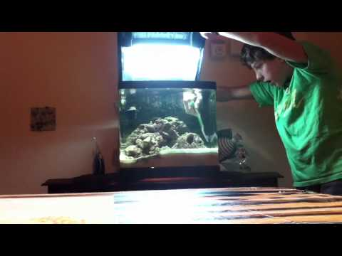 How to Clean a Saltwater Fishtank